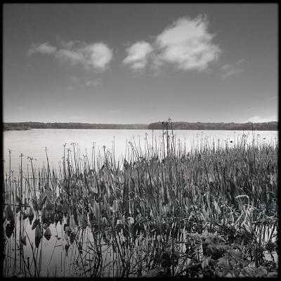 Dyke Marsh 3